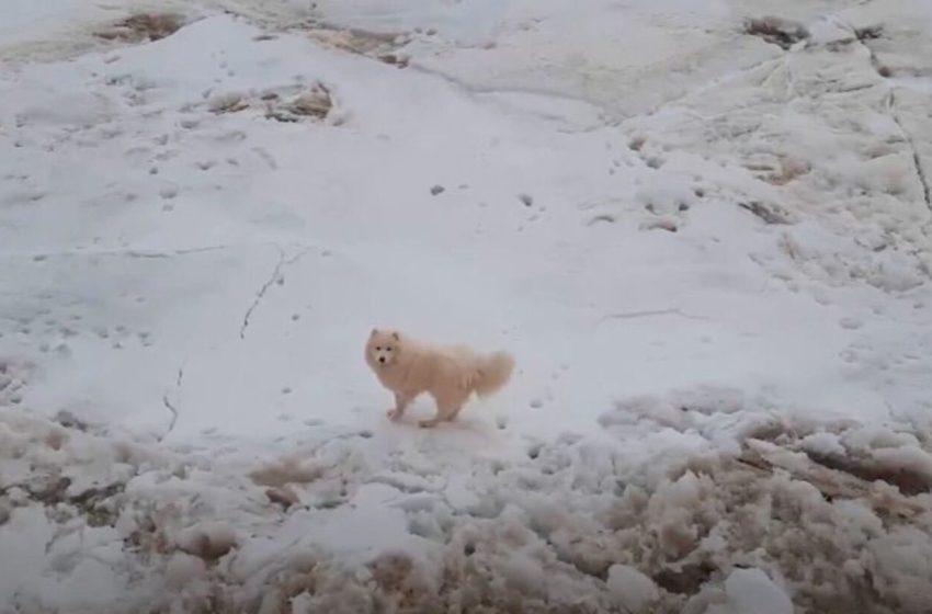 Perrita que estaba perdida fue encontrada en un peligroso glaciar.  Tenía las patas congeladas
