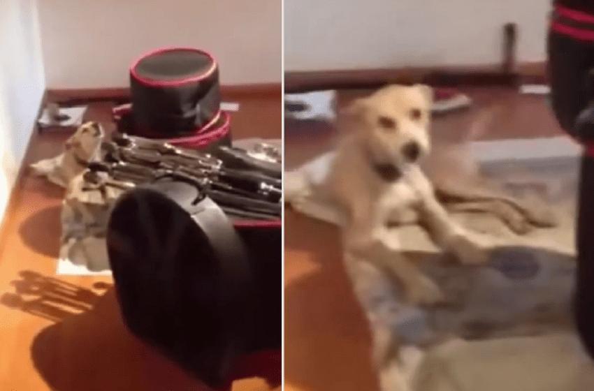 Un perrito le sigue el ritmo a su dueño que tocaba su saxofón (VIDEO)