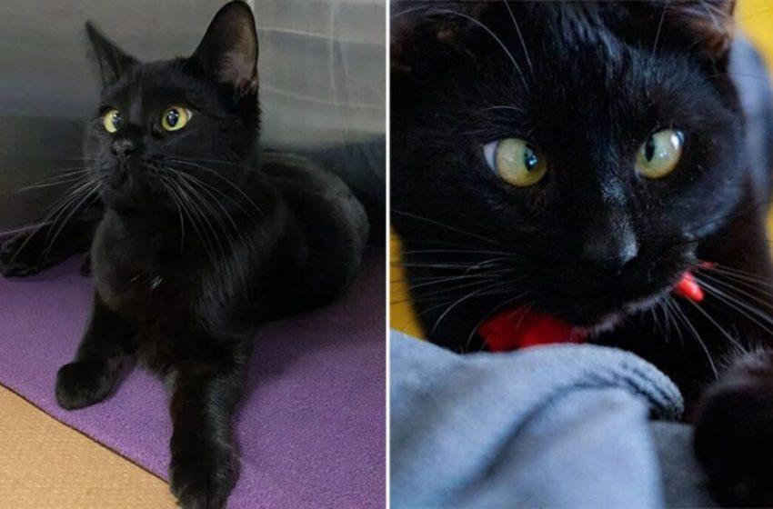 Gatito bizco fue rescatado de las calles ahora necesita de una familia y un hogar  para ser completamente feliz