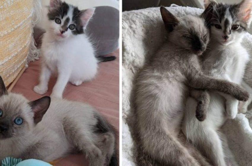 Gatito rescatado se ganó a la familia y los convenció de que adoptaran también a su amigo