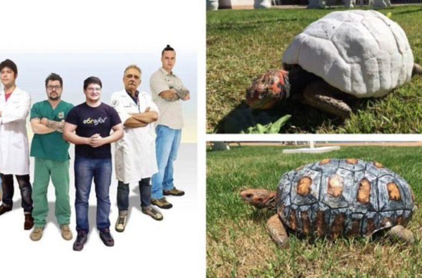Científicos brasileños fabrican un caparazón en 3D a tortuga que lo perdió tras un incendio