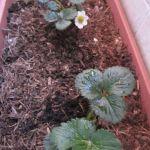 El jardín y los niños: 10 increíbles beneficios en una maceta.