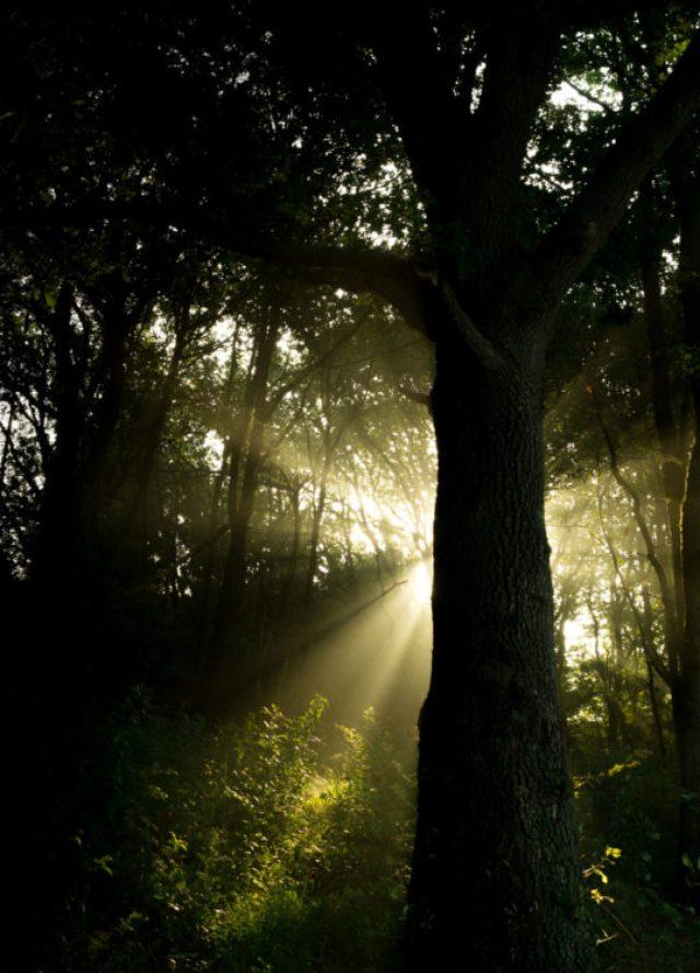 Sunbeams-and-tree-free-license-CC0-980x1362