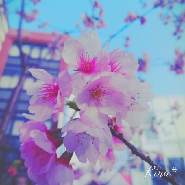 Fotor_145742322611560_noexif