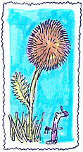 dent-de-lion