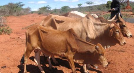 FAO Akan Salurkan 50 Juta Dolar Bantu 1,8 Juta Warga Ethiopia