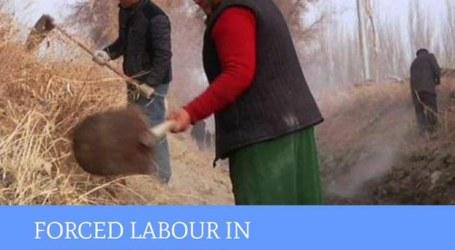 Muslim Uighur Dipaksa Kerja Tanpa Upah