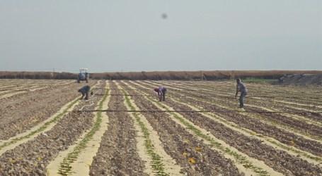 Serikat Petani Palestina Serukan Dukungan Untuk Petani di Lembah Yordan