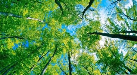 Khubah Jumat LPLH & SDA MUI: Tugas Manusia dalam Memelihara Lingkungan Hidup