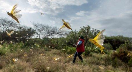 Kenya Kerahkan Pesawat Siram Miliran Belalang