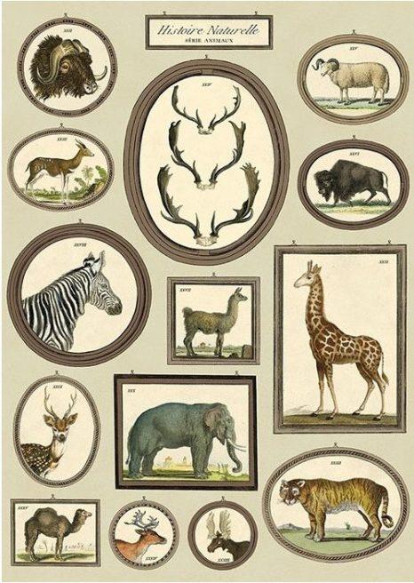 affiche-histoire-naturelle-animaux