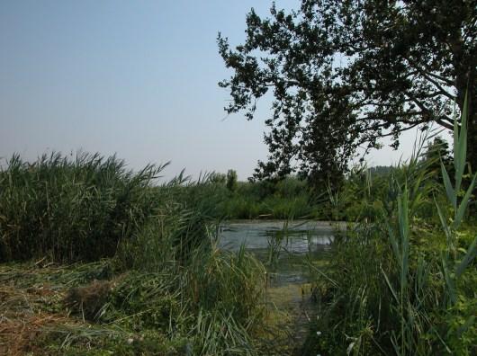 AREA LAGO-CANALE