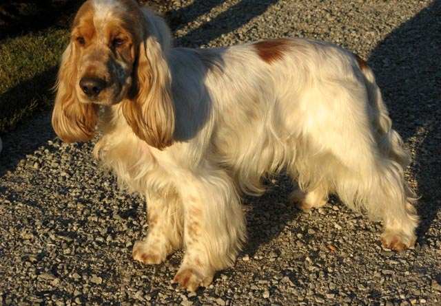 Esposizione-canina Gonzaga