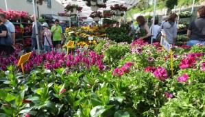 Castellaro in fiore - passate edizioni.1