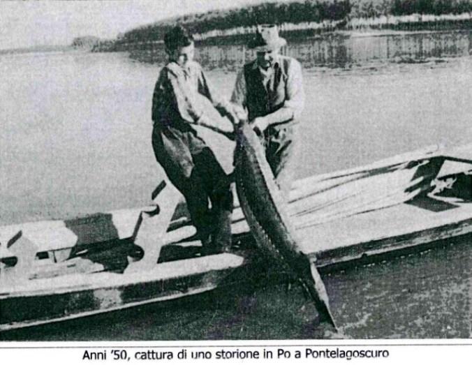 pesca dello storione storione.jpg