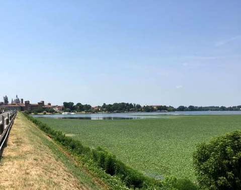 Mantova- Lago di mezzo - trigolera.jpg