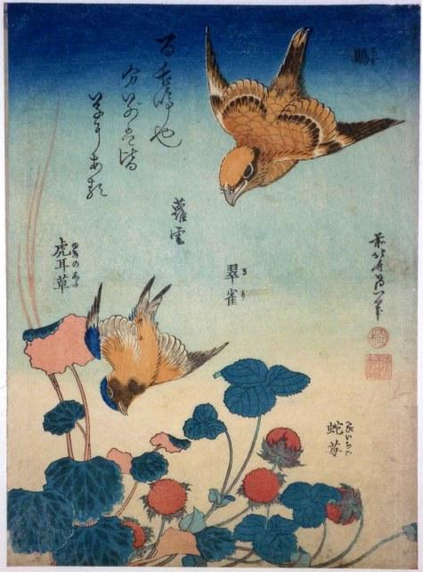 flora-and-fauna-86.jpg
