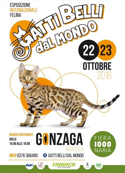 100x140 gatti belli dal mondo.jpeg