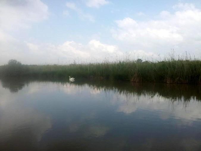 Parco del Mincio.jpg