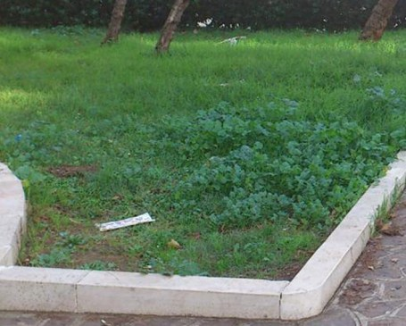 siringhe nei parchi pubblici.jpg
