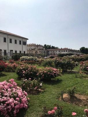 Roseto Niso Fumagalli1