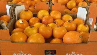 arance libera terra