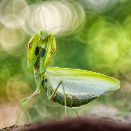 insetti - mori