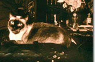 neve gatto della contessa giovanna d'arco