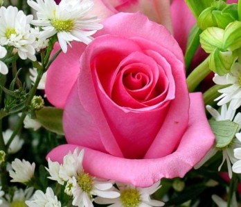 festa dei fiori quistello
