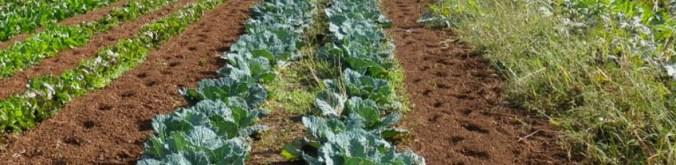 agricoltura mantovana1