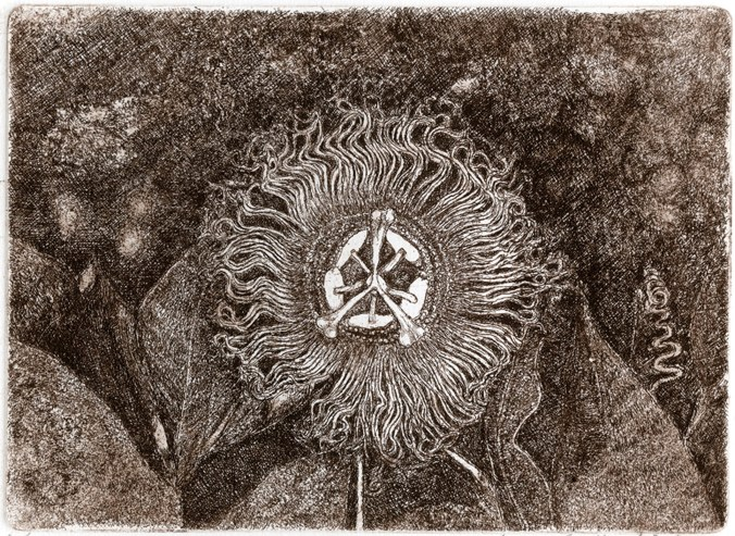 MONTINI DANILO - Passiflora, 2006, acquaforte, mm 130x175