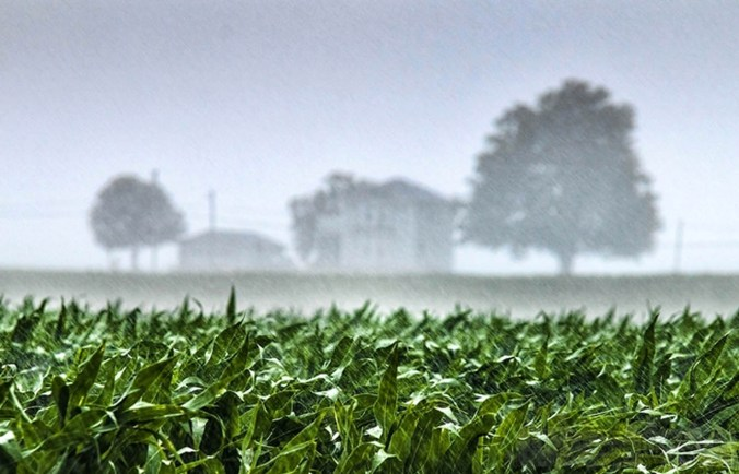 agricoltura-pioggia.jpg