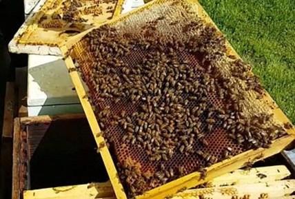 apicoltura coldiretti