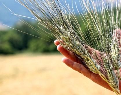 grano antico 2