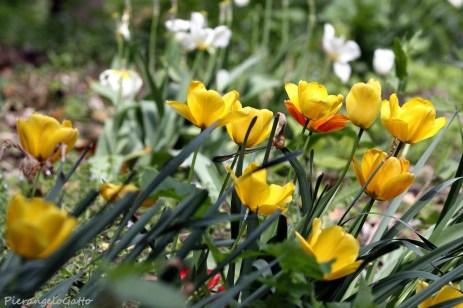 Parco Bertone fioriture