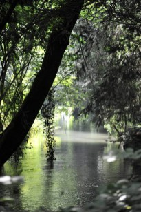 Parco Bertone scorci