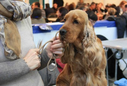 Esposizione Internazionale Canina ENCI 2.jpg