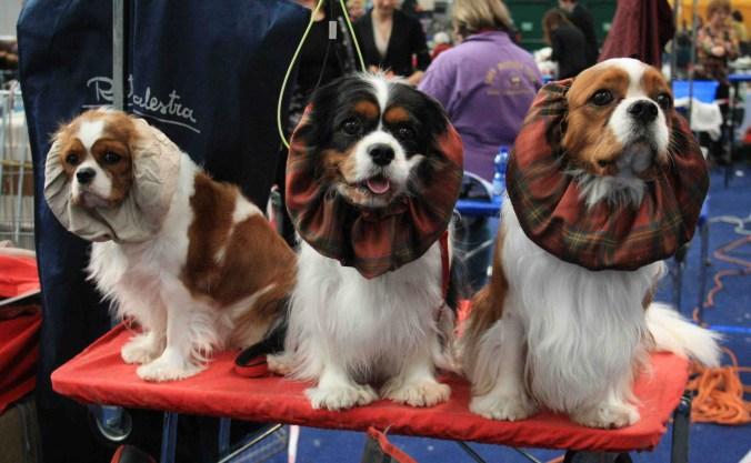 Esposizione Internazionale Canina ENCI 3.jpg