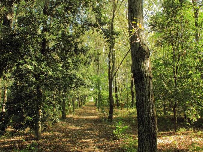 Il bosco di Adler.JPG