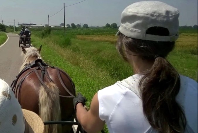 carrozze e cavalli alla foresta della carpaneta.jpg
