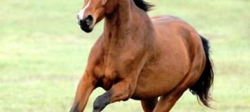 cavallo in fuga