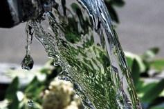 Koporossy Cromie d acqua 60x80 24.5.20 DSC_2052