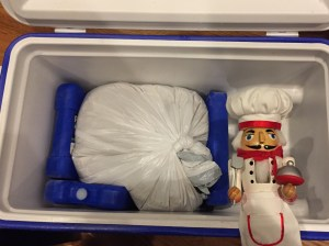 Pepe with turkey brining in a cooler