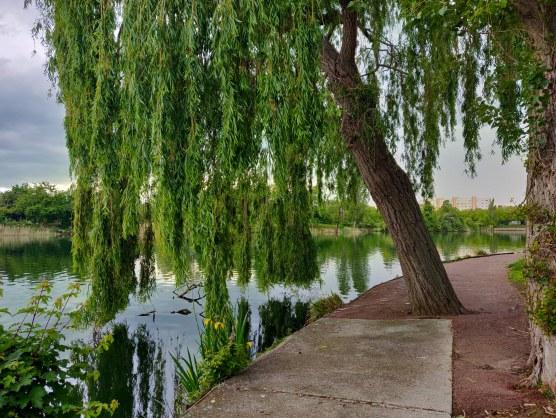 Arbre majestueux avec de longues branches