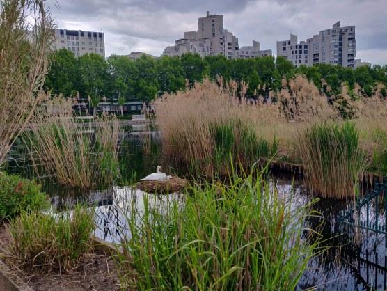 Mindandbeauty : Balade au lac de Créteil : Un cygnes et ses petits