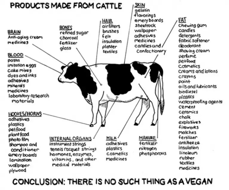 Products Made from Cattle (Image)