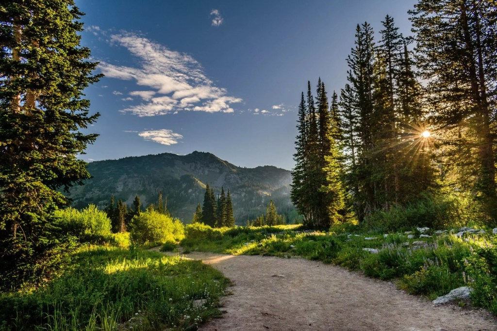 Lush green forest trail with mountains in background and sun peeking through trees, highlighting the benefits of forest bathing and breast cancer