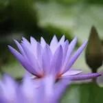 flower-5538547_1920 copy