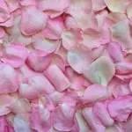 rose-petals-3194062_1920 copy