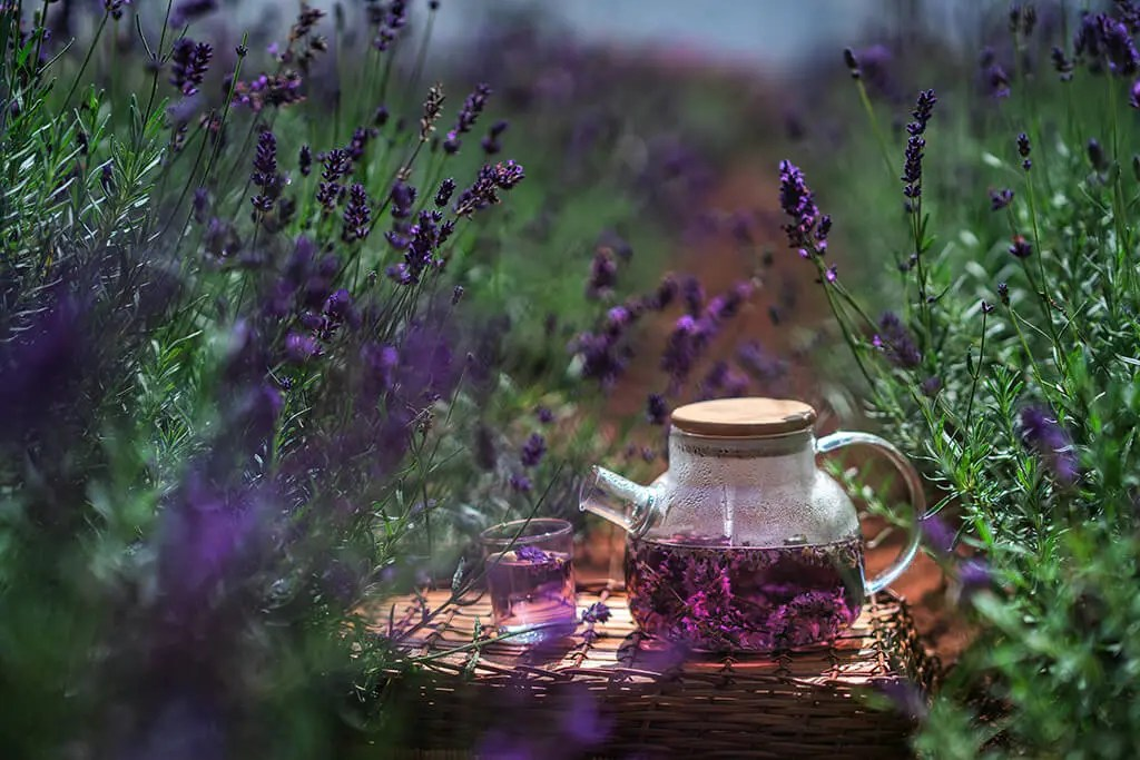 Calming Tea - Lavender tea